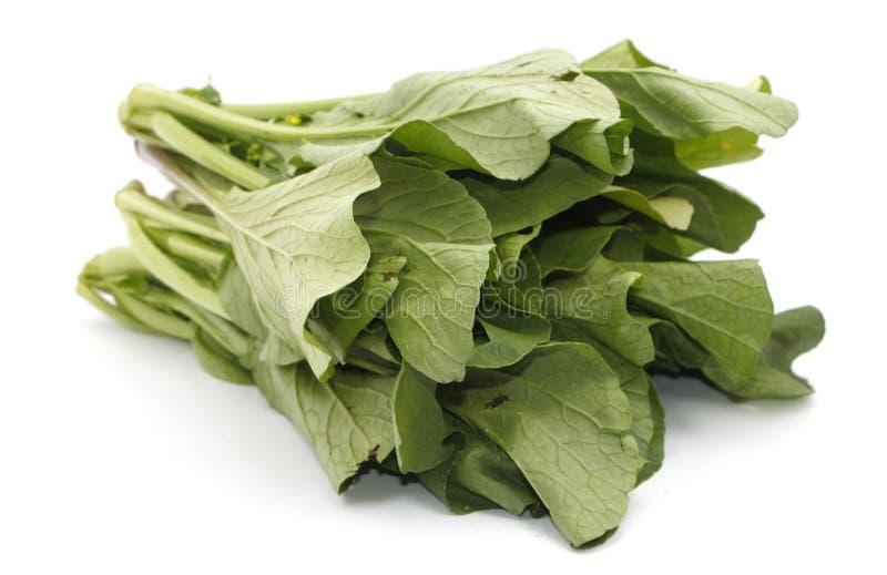 Grönsak för senapsgula gräsplaner över vit arkivfoto