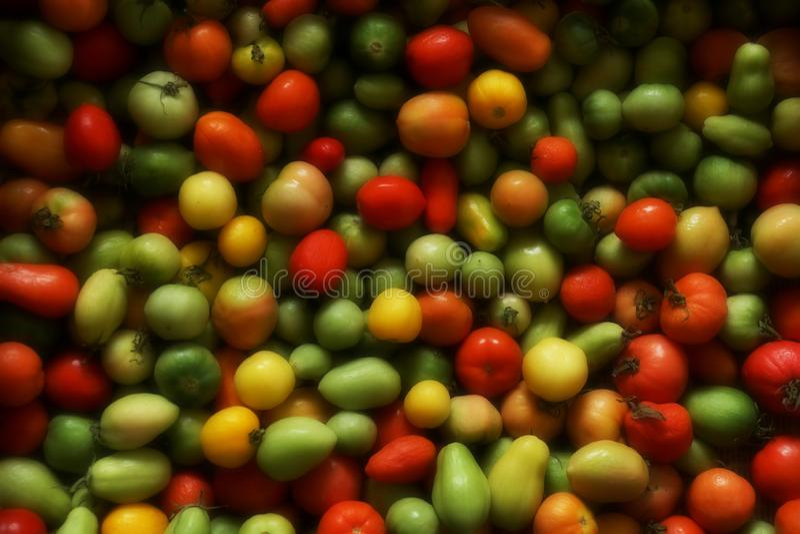 grönsak för tomater för bakgrundszucchinier ny röd gul gre för olika mognadtomater arkivbild