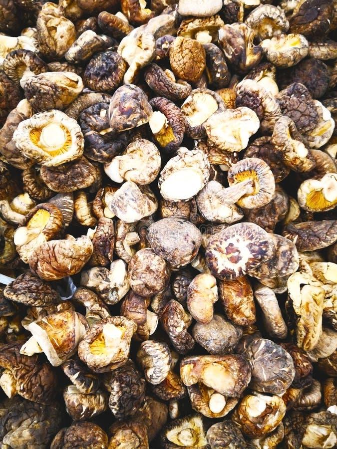 Grönsakbegrepp Många torra shiitakechampinjoner är i en rotting b arkivfoton