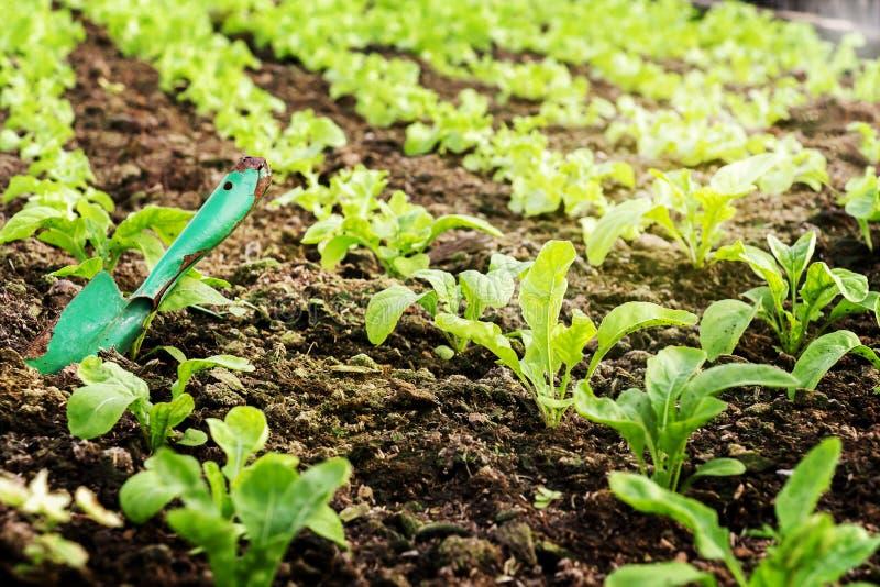 Grönsaker brukar att plantera inomhus vid icke-giftet som är organiskt med beauti arkivbilder