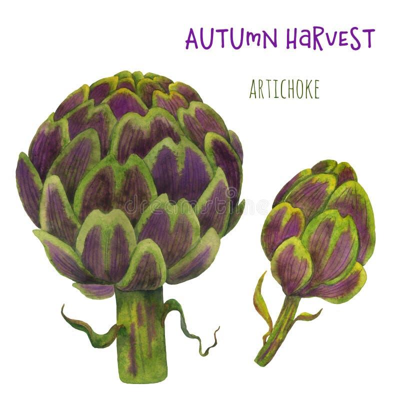 Grönsaker för kronärtskockavattenfärggräsplan på en vit bakgrund stock illustrationer