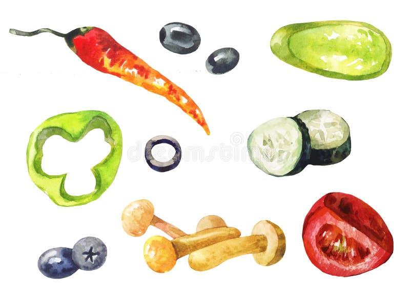 Grönsaker och champinjoner i vattenfärg vektor illustrationer