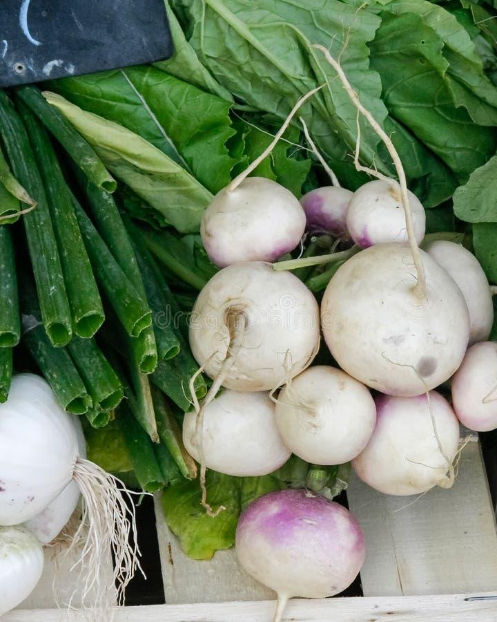 grönsaker på en lokal lantlig marknad i sommarmånaden juli av staden arkivbilder