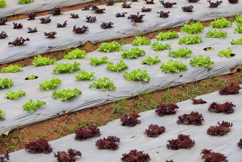 Grönsaker på koloni royaltyfri foto