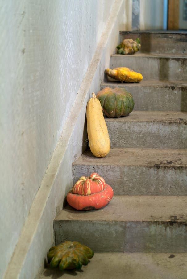 Grönsaker på trappan arkivfoton