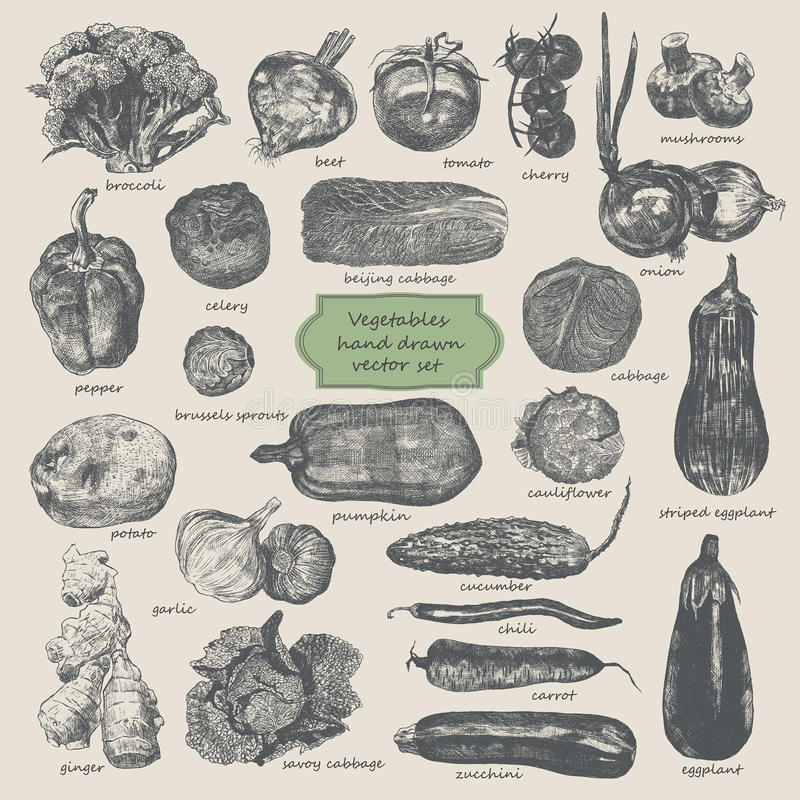 Grönsaker räcker den utdragna vektoruppsättningen stock illustrationer