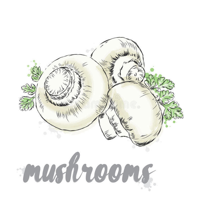 Grönsaker som dras av handen grönsaker för vektor för eps-mapp bland annat Mat Materielmål Champinjoner Champignon vektor illustrationer