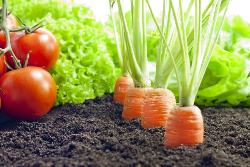 Grönsaker som växer i trädgården royaltyfria foton