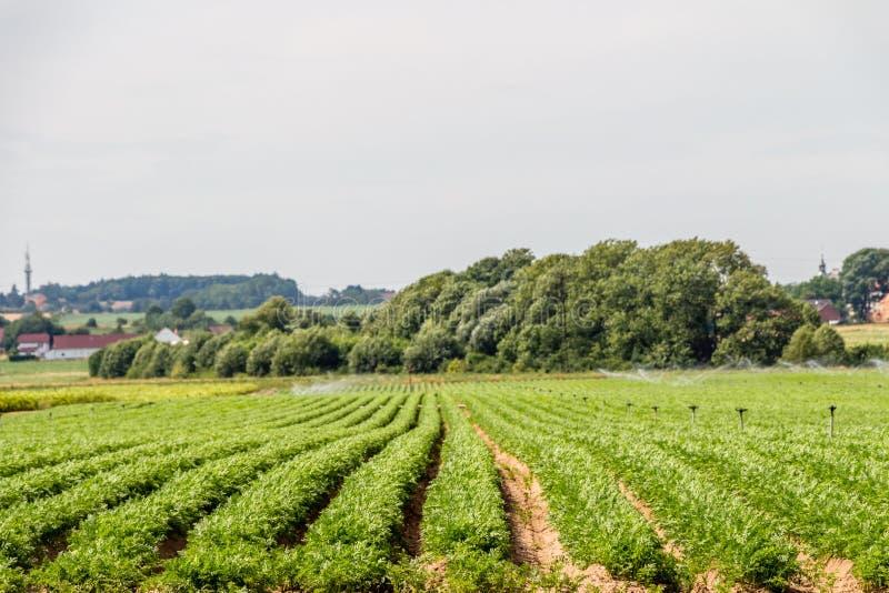 Grönsakfält på landssidan arkivbilder