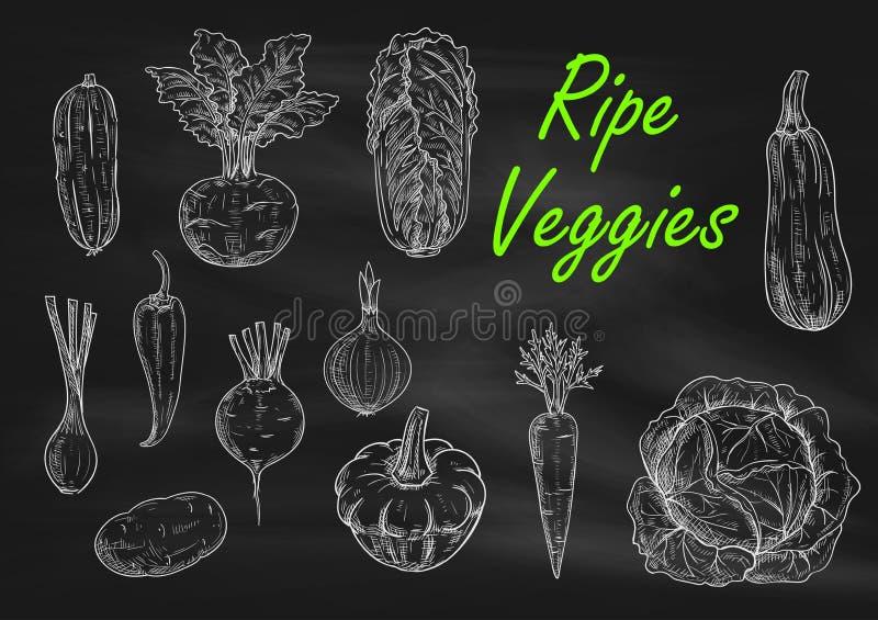 Grönsakkrita skissar på menysvart tavla stock illustrationer
