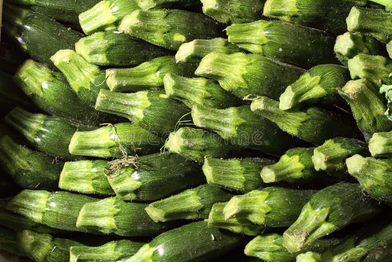 grönsakssommarpumpa - färska organiska zucchini royaltyfri bild