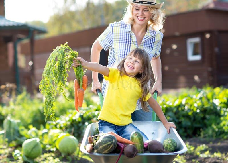 Grönsakträdgård - barnträdgårdsmästare med morötter och arkivbild
