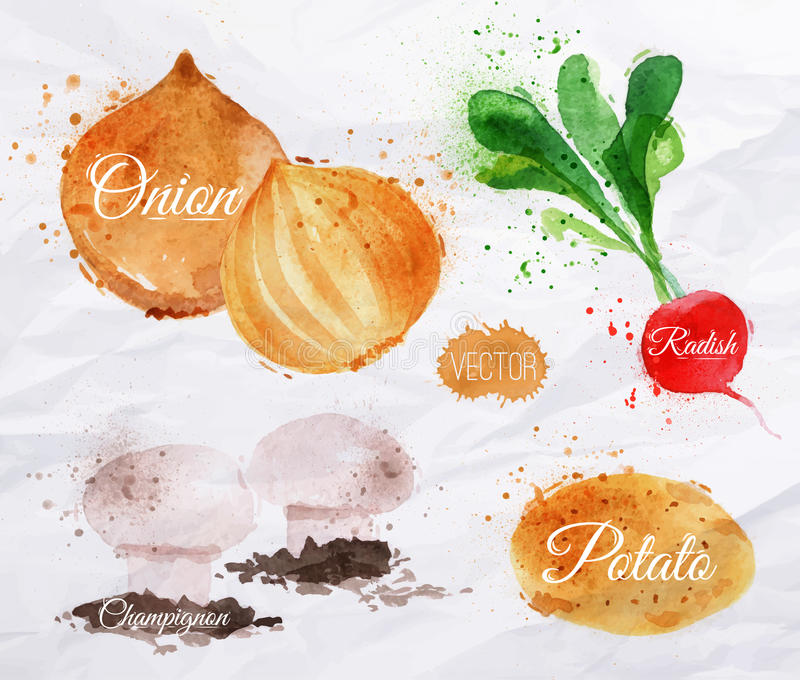 Grönsakvattenfärgrädisor, lökar, potatisar,