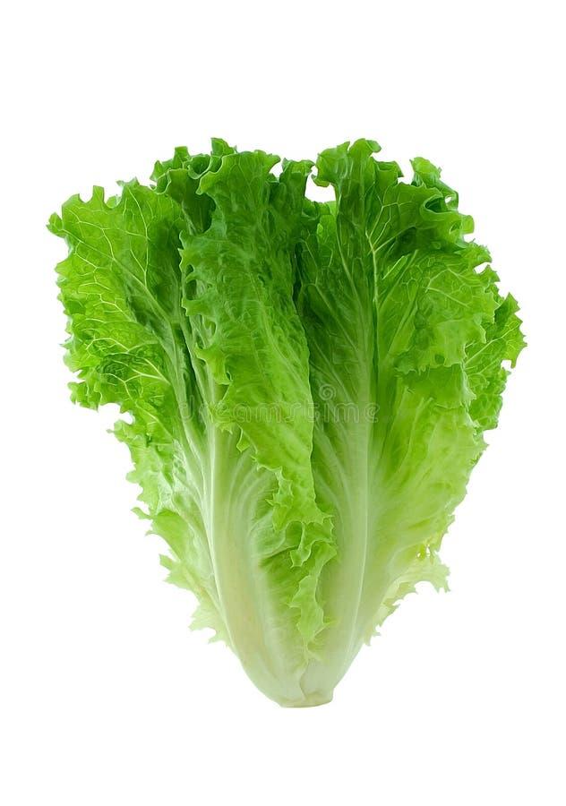grönsallat royaltyfri bild