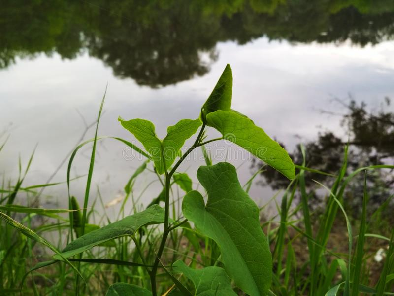 Grönska gräs, växter, flod, molnig dag royaltyfria foton