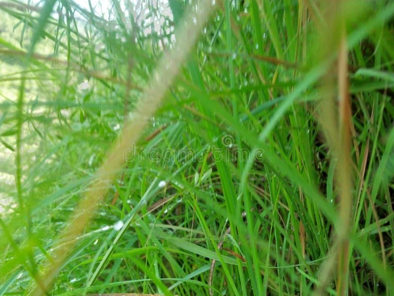 Grönska på morgonen arkivfoto