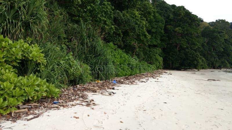 Grönska på trevlig sikt för strand royaltyfri bild