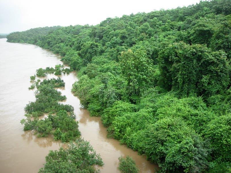 grönskaflodstrand royaltyfri foto