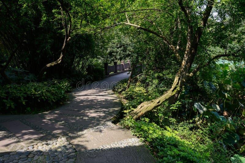 Grönskande kullersten-och-stenhäll bana i varmt eftermiddagsolljus royaltyfri fotografi