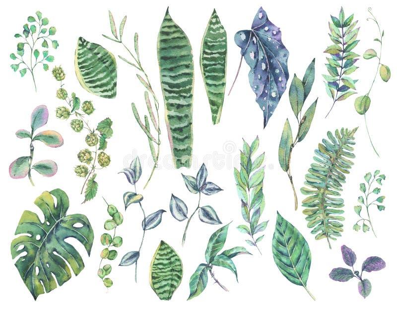 Grönskauppsättning av tropiska sidor för exotisk vattenfärggräsplan royaltyfri illustrationer