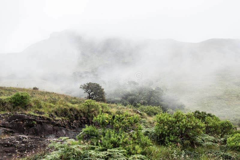 Grönskor på kullar arkivfoto