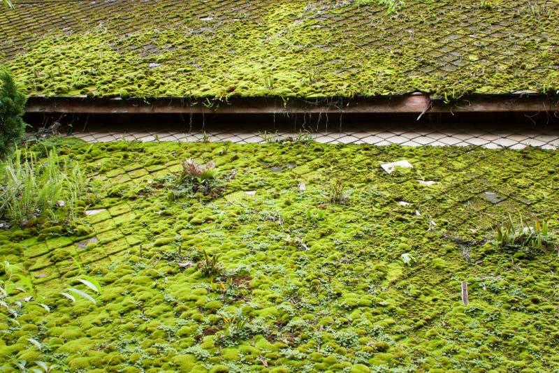 Grönt asiatiskt tak arkivfoto