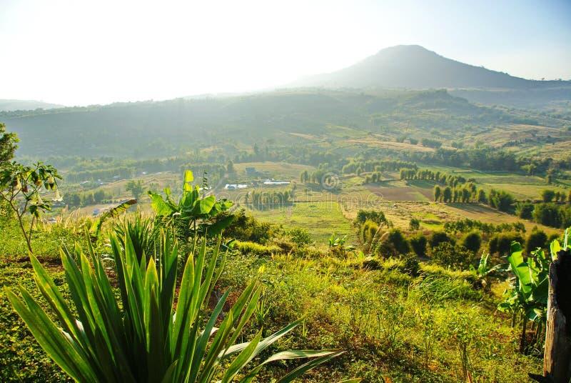 Grönt berg arkivbild