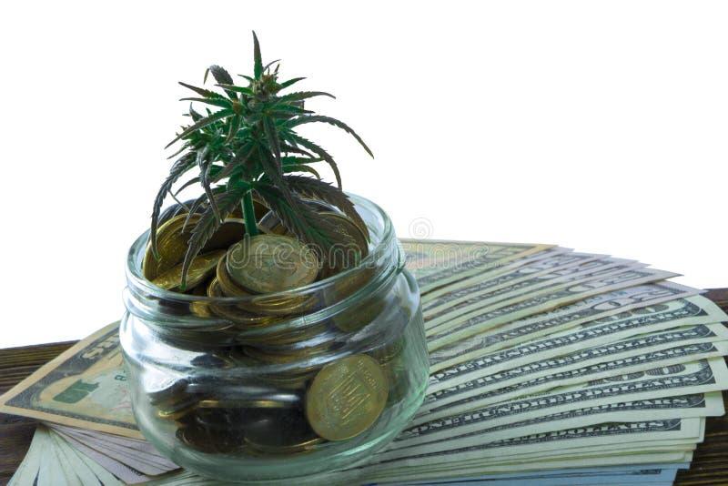 Grönt blad av cannabis, marijuana, Ganja, hampa på en räkning 100 US dollar äganderätt för home tangent för affärsidé som guld- n arkivfoton