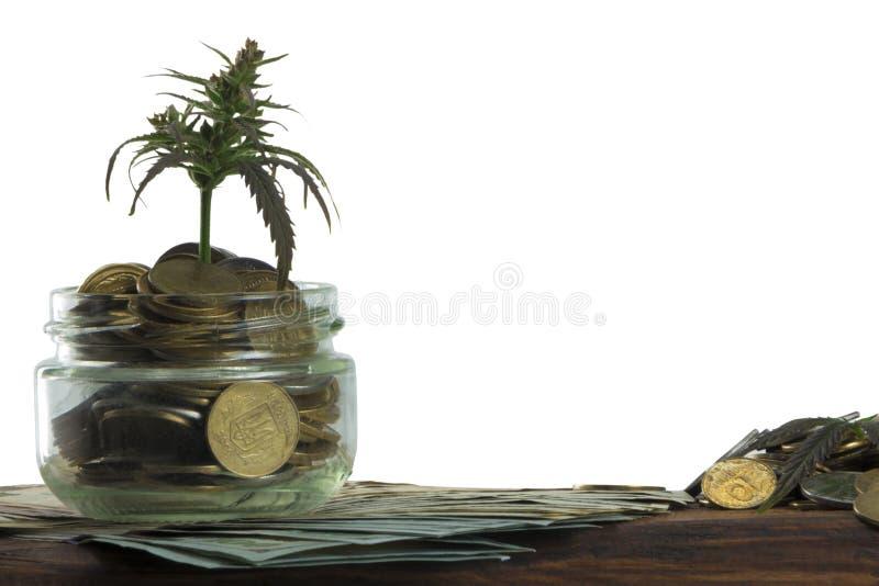 Grönt blad av cannabis, marijuana, Ganja, hampa på en räkning 100 US dollar äganderätt för home tangent för affärsidé som guld- n arkivfoto