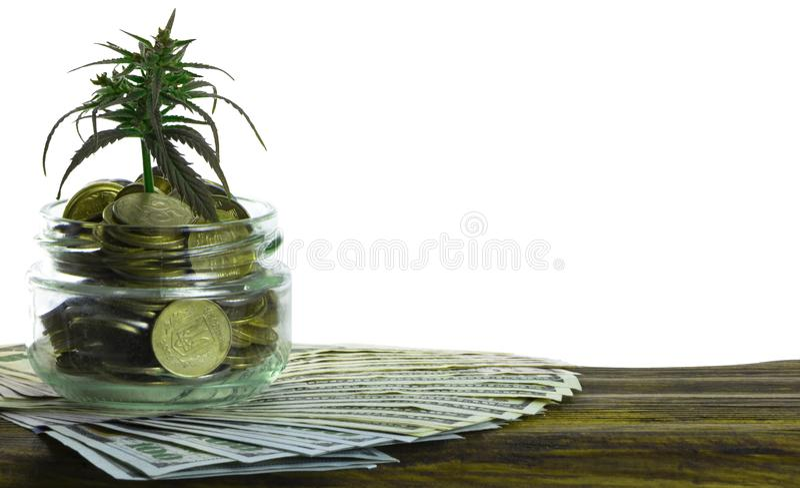 Grönt blad av cannabis, marijuana, Ganja, hampa på en räkning 100 US dollar äganderätt för home tangent för affärsidé som guld- n royaltyfria foton