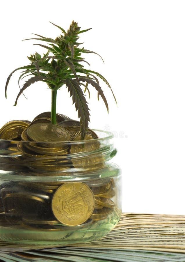 Grönt blad av cannabis, marijuana, Ganja, hampa på en räkning 100 US dollar äganderätt för home tangent för affärsidé som guld- n royaltyfri foto