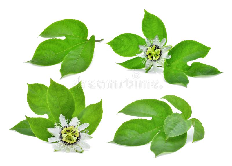 Grönt blad av passionfrukt som isoleras på vit royaltyfria foton