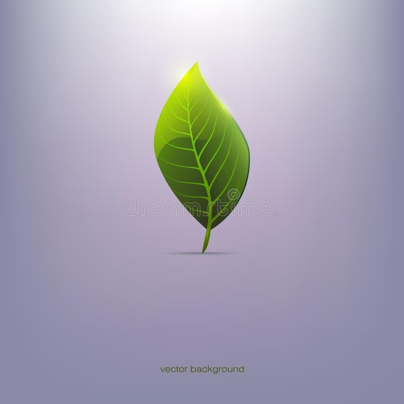 Grönt blad, blå bakgrund, royaltyfri bild