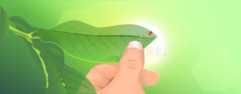 Grönt blad för handhåll Nyckelpiga på grön bakgrund royaltyfri illustrationer