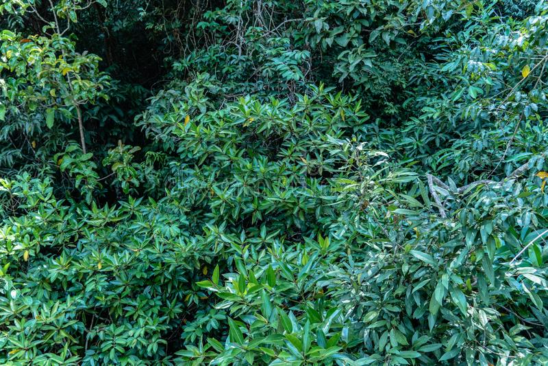 grönt blad i ett färdigt träsk royaltyfri foto