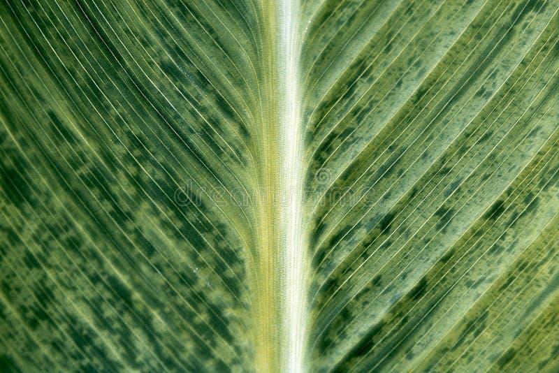 Grönt blad i trädgårds- makro fotografering för bildbyråer