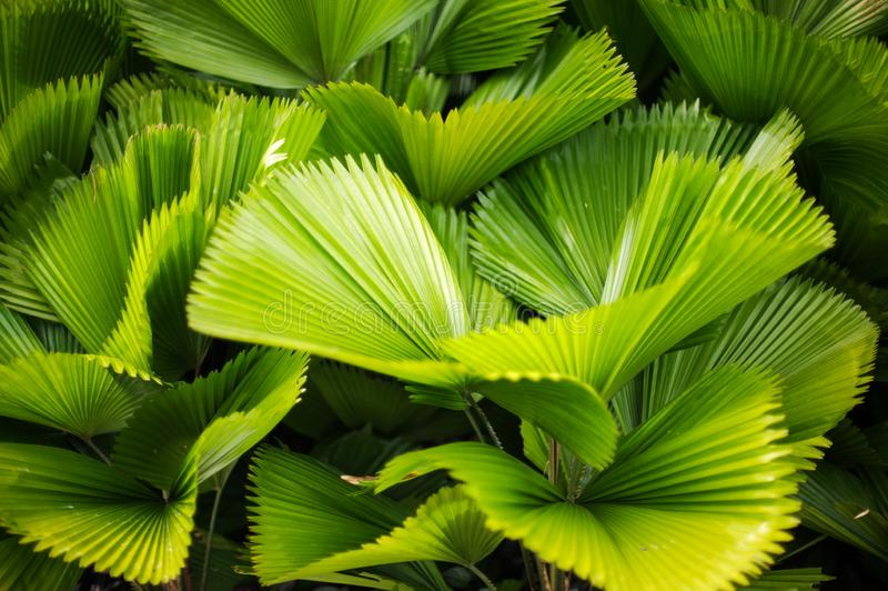 Grönt blad med den randiga modellen i solljuset arkivbild