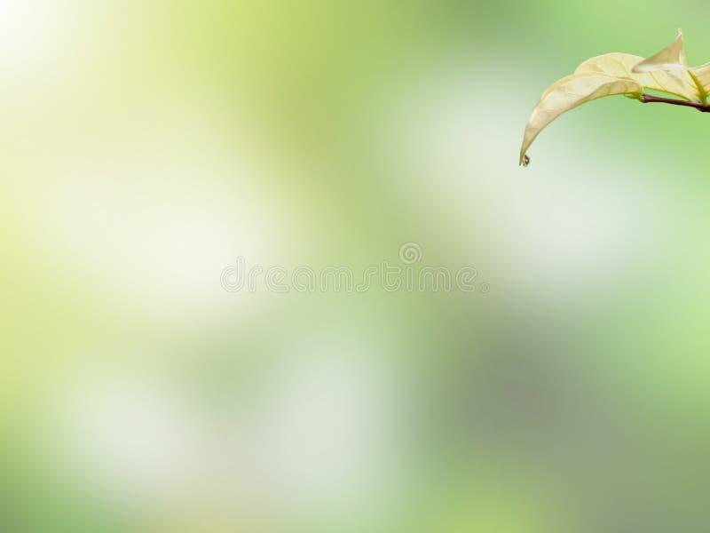 Grönt blad med liten droppevatten arkivfoton
