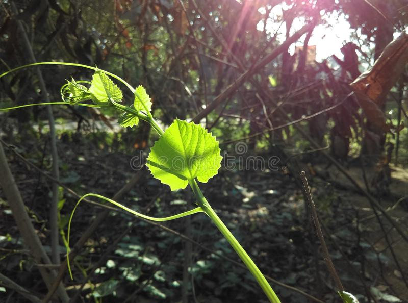 Grönt blad och solsken royaltyfri bild