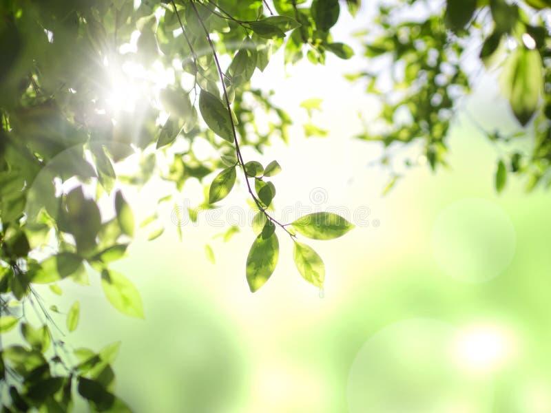 Grönt blad på bokehbakgrund royaltyfri foto