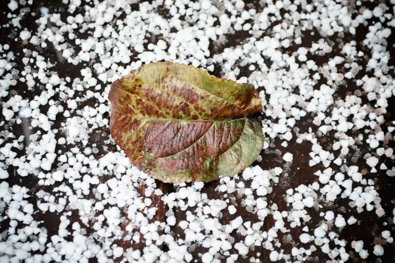 Download Grönt Blad På Den Första Snön Arkivfoto - Bild av snow, friskhet: 78730882