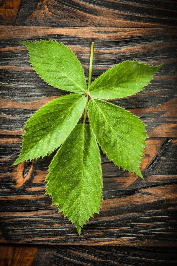 Grönt blad på föråldrat träbräde arkivfoton
