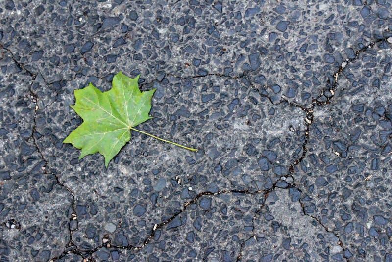 Grönt blad på trottoar arkivbilder