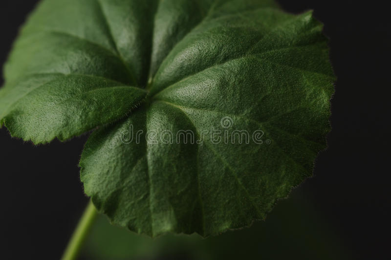 Grönt bladslut arkivbilder