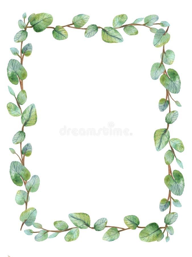 Grönt blom- ramkort för vattenfärg med sidor för silverdollareukalyptusrunda arkivfoto