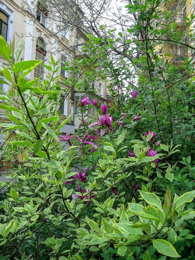 Grönt buskehus för rosa blommor royaltyfri foto