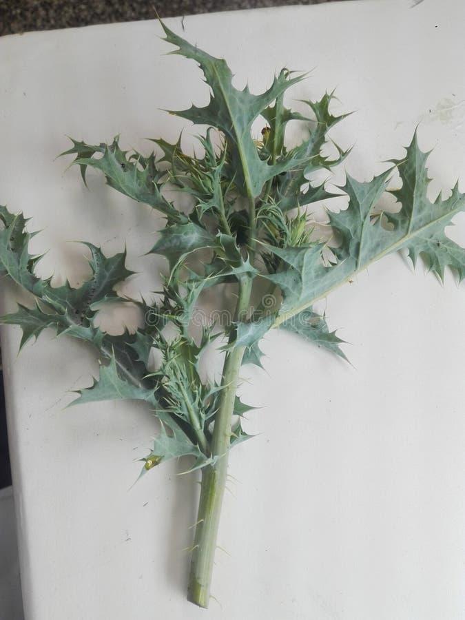 Grönt complety för växt i laboratorium av botanik arkivfoto