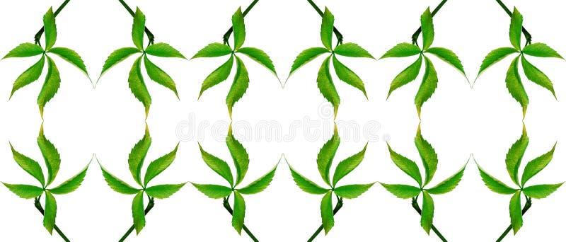 Grönt druvablad naturligt seamless för bakgrund arkivfoton