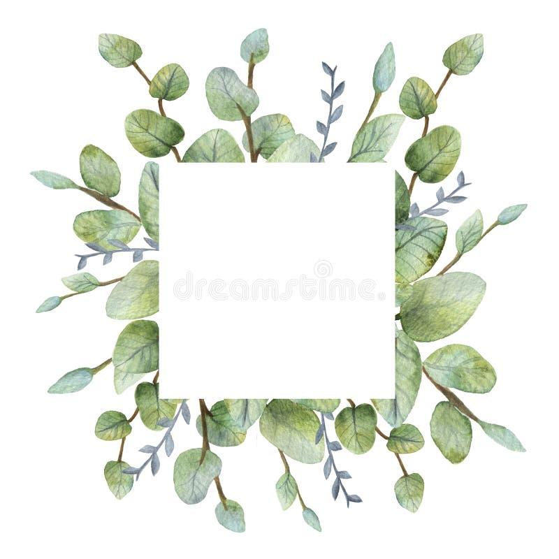 Grönt eukalyptuskort för akvarell på vit bakgrund royaltyfri fotografi