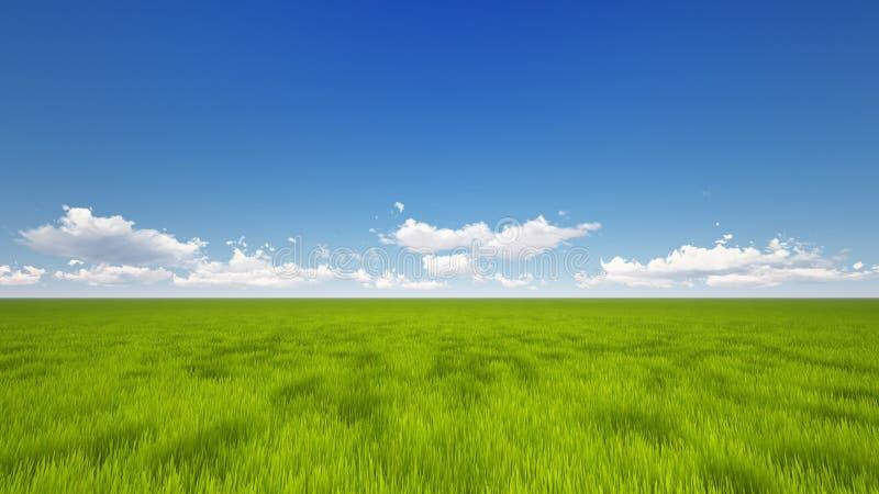 Grönt fält royaltyfri foto